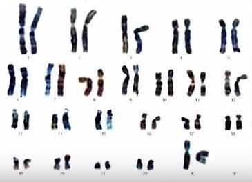 23 парных хромосом человека