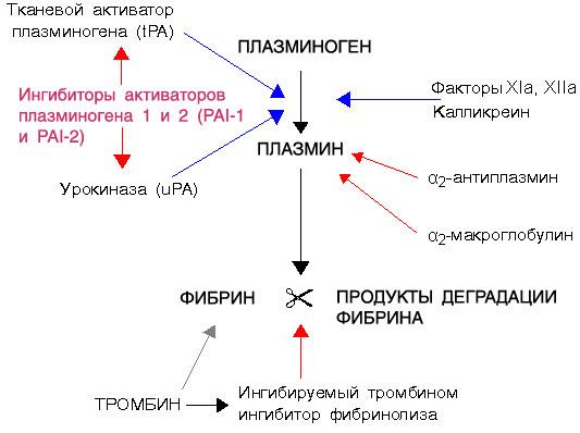 Схема фибринолиза.