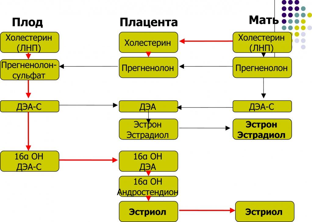 Организация пренатального скрининга в условиях лаборатории и клиники